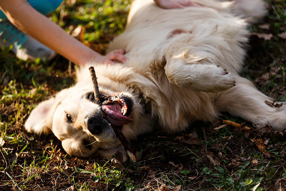 Belly rub
